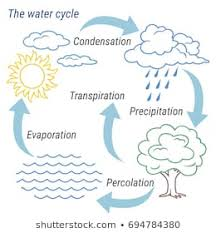 Flow Chart On Water Cycle Royalty Free Water Cycle Stock Images Photos Vectors