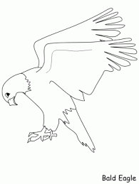 Small Picture Free coloring pages and coloring book Page 178 Birds Toucan