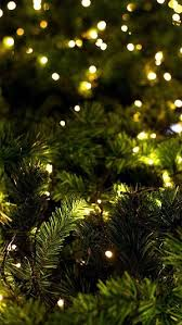 Christmas Tree Lights Wallpaper For IPhone XS Max IPhone XS And IPhone XR
