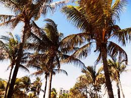 palm trees tumblr vintage. South Beach: The Hunt For Vintage Accessories Palm Trees Tumblr O
