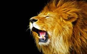 Lion Wallpaper Hd, High Quality Lion HD ...
