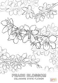 Small Picture Delaware State Flower coloring page Free Printable Coloring Pages