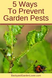 every gardener needs to learn about vegetable garden pest control here are 5 easy tips to protect your veggies from unwanted critters in the garden