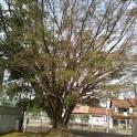 imagem de Esteio Rio Grande do Sul n-19