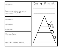 blank food chain pyramid. Delighful Food Food Chain And Energy Pyramid Brochure Foldable In Blank N