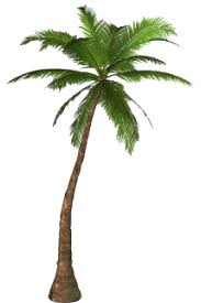 Download Palm Tree PNG images transparent gallery. Advertisement