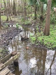 danielle dilevo recorded avery island jungle gardens