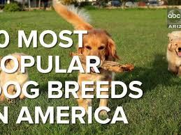 dog breeds america dogs breed sierramichelsslettvet the most por