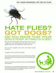las 25 mejores ideas sobre get rid of flies en pinterest