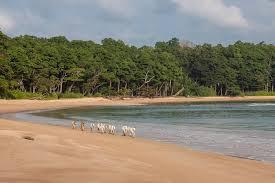 Image result for VIJAYNAGAR BEACH IN LITTLE ANDAMAN