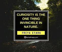 Curiosity Quotes Mesmerizing 48 Curiosity Quotes That'll Inspire You To Never Stop Questioning