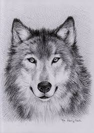 wolf drawing. Interesting Drawing Unique Wolf Drawings  Google Search To Wolf Drawing T