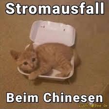 Stromausfall Beim Chinesen Lustige Katzenbilder