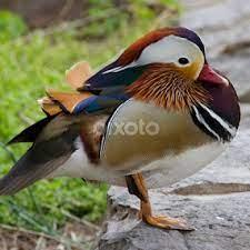 Debora Bird's Profile - Lexington, TN, US | Pixoto