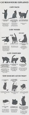 Cute Kittens Posing As Sexy Pin Up Girls Fat Cat Cats