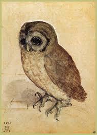 The Little Owl, 1506 - Albrecht Durer