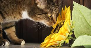 poisonous plants for cats a complete guide to which plants are cat safe and which