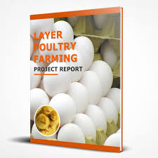 Layer Poultry Farming Project Report For Bank Loan Download Pdf