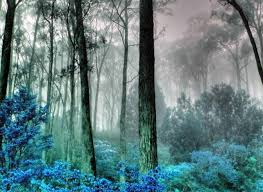 Because cool forest look haze blues and greens iridescence