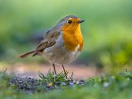garden animals. Wild Birds And Other Animals Can Be Attracted Into Your Garden With Insects, Berries Water R