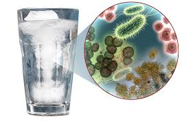 Znalezione obrazy dla zapytania coli bakterie w wodzie