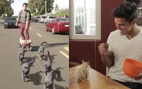 Les drôles de vidéos des animaux d'Aaron Benitez - GOLEM13.FR : GOLEM13.FR