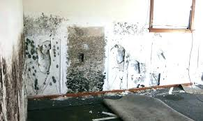 black mold on concrete walls remove mold from concrete removing explore black and more how to