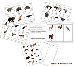 Animal Unit: Vertebrate-Invertebrate Animals Worksheet Packet (50+ ...