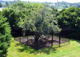 Producing Fruit  Joan Walker HahnPlum Tree Not Producing Fruit