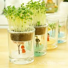 agent seasons cup miniature potted houseplants decoration lazy gl pot plants a generation of fat in bottles jars bo from home garden on