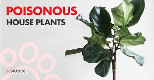 house plants that are poisonous to dogs