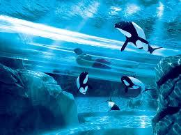 underwater water slide. Plain Slide Shark  To Underwater Water Slide I