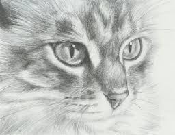 realistic cat drawing in pencil. Perfect Pencil How To Draw Realistic Cats  25 Hand Drawing Cat Images For Your  Insparation  LibDesigner CatDrawing On Realistic In Pencil Pinterest