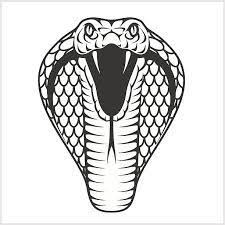 snake head side view drawing. Image Result For Viper Snake Head Drawing Inside Side View