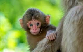 baby animals wallpapers.  Animals Throughout Baby Animals Wallpapers L