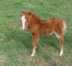 baby mini horse.  Horse For Baby Mini Horse