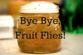 Home Reme s to Get Rid of Fruit Flies and Gnats