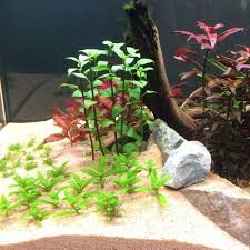 grow aquarium plants