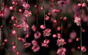 Pink Flowers Desktop Wallpapers ...