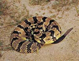 Snake Classification Facts Types Britannica