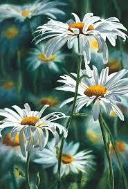 shasta daisy fine art reion watercolor paper by ssfreeman43