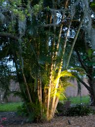 tropical outdoor lighting. 600 × 800 In Landscape Lighting Tropical Outdoor