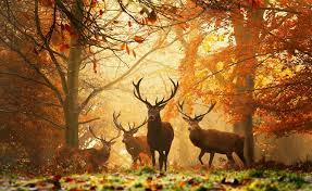 hd wallpaper background image id 298534 1920x1180 deer