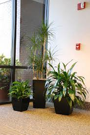modern office plants. Interior Plants Create A Working Atmosphere, Office Productivity Increases With Intierior Plants, Healthy Work Environment , Modern P