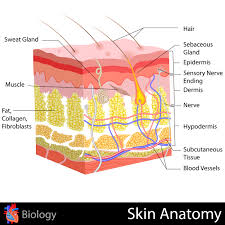 Home Remedies for Razor Burns: How to Get Rid of Razor Burns ...