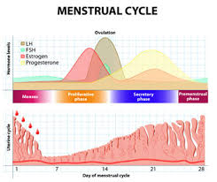 Classic Clinical Findings Of Menstrual Cycle Abnormalities