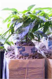 indoor gardening supplies. Indoor Gardening Supply Best Of 110 Garden Supplies .