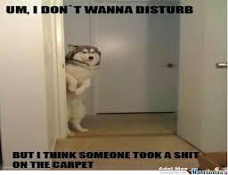 Guilty Dog by trigeredge15 - Meme Center via Relatably.com