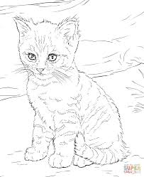 Small Picture Cute Kitten coloring page Free Printable Coloring Pages