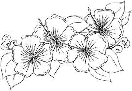 Wonderful Hibiscus Coloring Pages Printable Photos Of Tiny Awesome